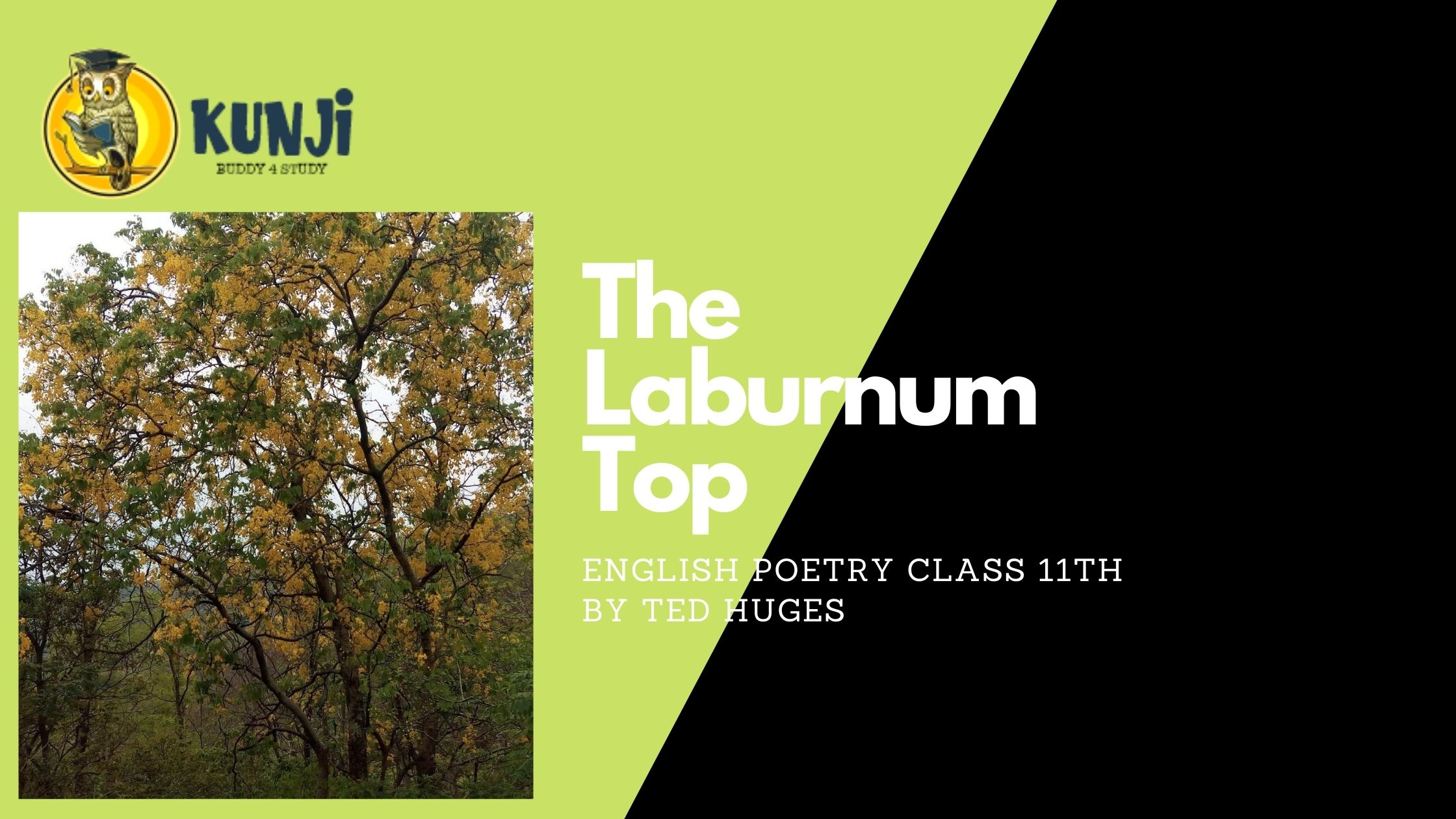 NCERT Solutions for 11th Class English poetry The laburnum Top