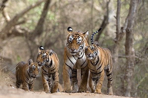 NCERT Solutions for Class 10 Geography Chapter 2 Forest and Wildlife Resources